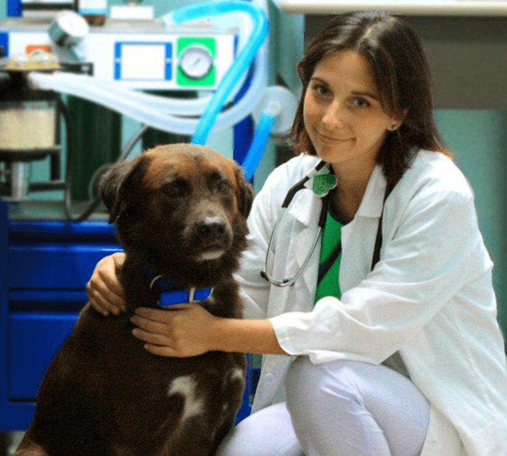 Dr Andreea