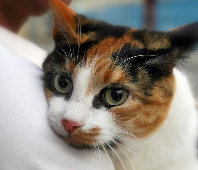 Cat 1 (780 x 670)