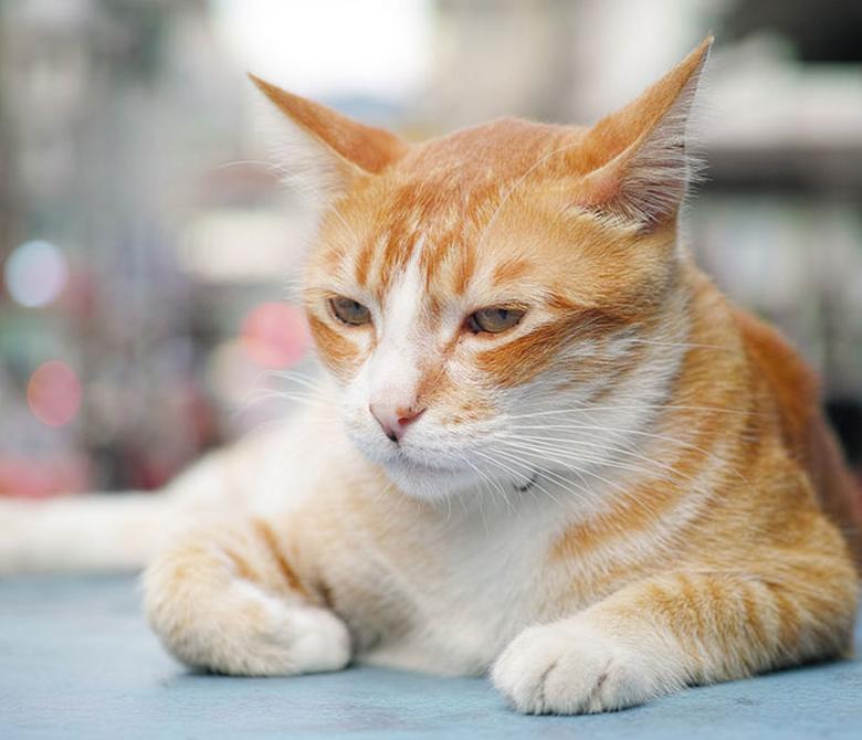Cat 2 (780 x 670)